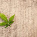 Légalisation du Cannabis, le point en France en 2018 ?
