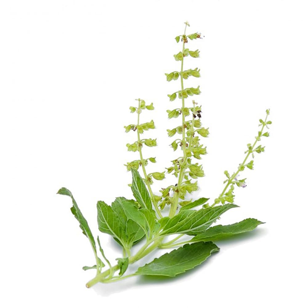 Photo de Tulsi Basilic Indien Bio herbe en sachet