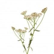 Achillée Bio herbe en sachet