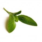 Sauge Bio herbe en sachet