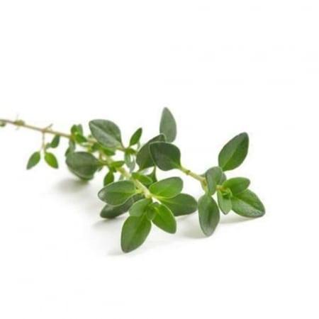 Thym Bio herbe en sachet